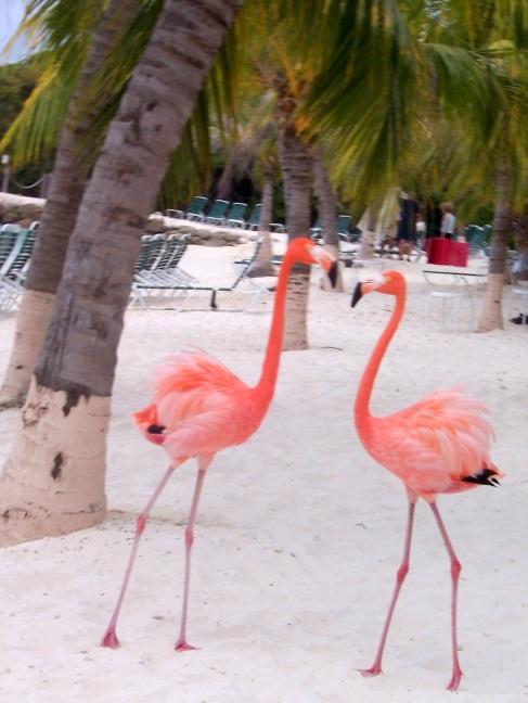So what if you have flamingos on your lawn; these are real