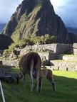 Mother working at her lawn maintenance task while kid feeds, Main Lawn, Machu Picchu