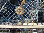 Rockport is an active fishing port; here is a detail of a lobster trap