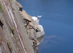 Gulls rest on cleft left by quarrying
