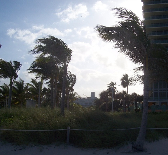 Windblown trees in silhouette, Miami Beach