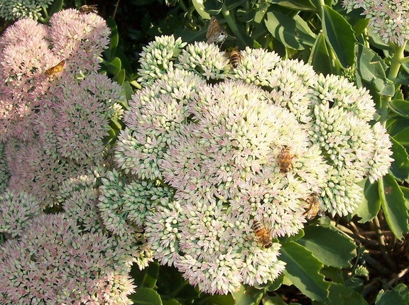 Butterfllies and bees swarm to the flowers in the yard