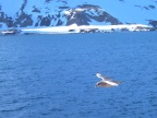A gull welcomes us to Hornsund