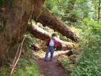 Fred on Spruce Trail in Hoh Rain Forest