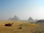 Two camels, four pyramids, and a rock