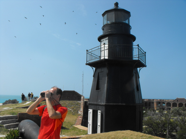 A few of Fort Jefferson's myriad Frigate Birds soar over its Harbor Light lighthouse, Dry Tortuggas