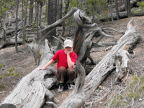 Tired of posing on a twisted log at Grand Canyon of the Yellowstone