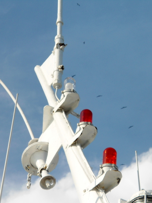 Frigate birds circle lights on our boat heading for the Panama Canal