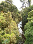 View of Sarapiqui River from suspension bridge over the forest canopy