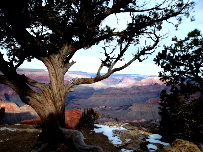 Grand Canyon unsuccessfully hides behind a tree