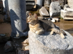 Dignified cat graces the outhouse, Ephesus