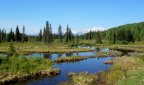 Prime moose habitat along the Susitna River