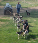 Sled dogs demo at Susan Butcher Kennels