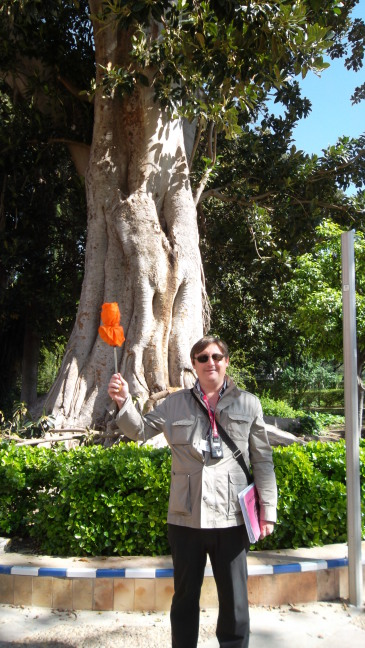Our fearless guide Juanjo and ficus tree, Sevilla