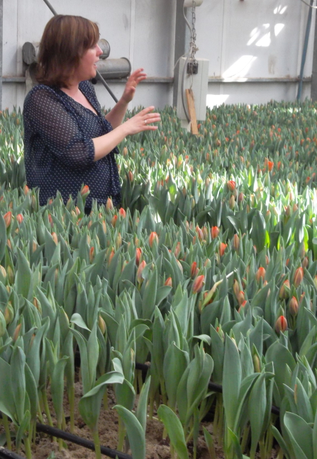Our tour guide in computer-controlled greenhouse at tulip farm.  They market bulbs, not flowers