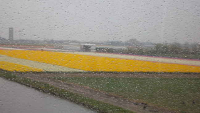 Rain on the bus drive to Keukenhof Gardens