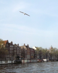 View from our boat trip around Herengracht Canal - VERY expensive houseboats