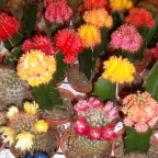 Cactus display at Flower Market in Amsterdam