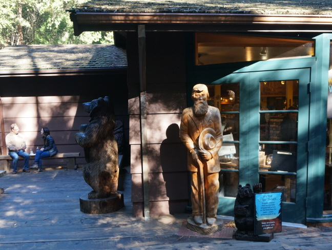 Would John Muir appreciate using a tree to make an image of himself? At Muir Woods, CA.
