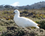 No predators in the Falklands so the birds are unwary