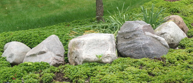 Rocks sit silent as sentries guarding a neighbor's tree